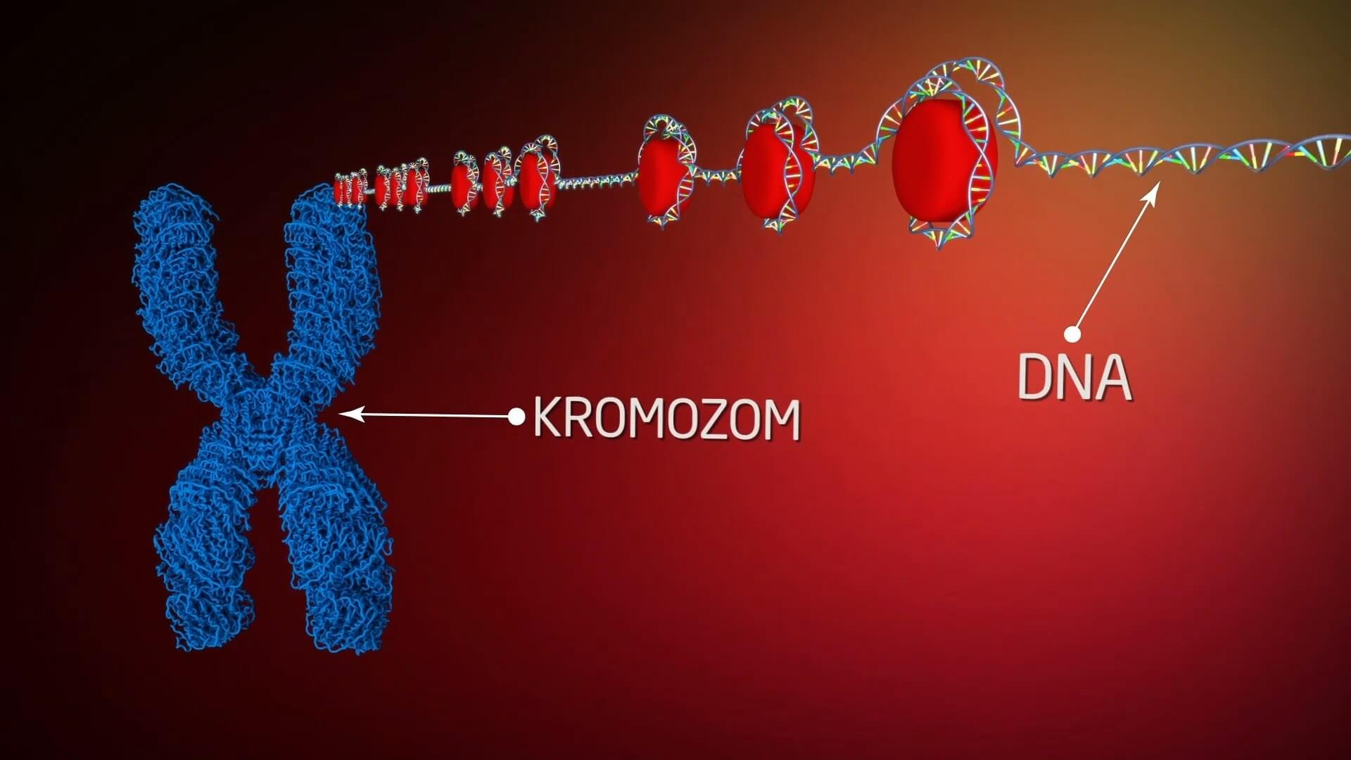 Proteindeki Yazılım İnsanoğlunun Maddesel Yapısı Belgesel Animasyon Film 11 1920x1080 - Proteindeki Yazılım, İnsanoğlunun Maddesel Yapısıyla İlgili Keşifleri