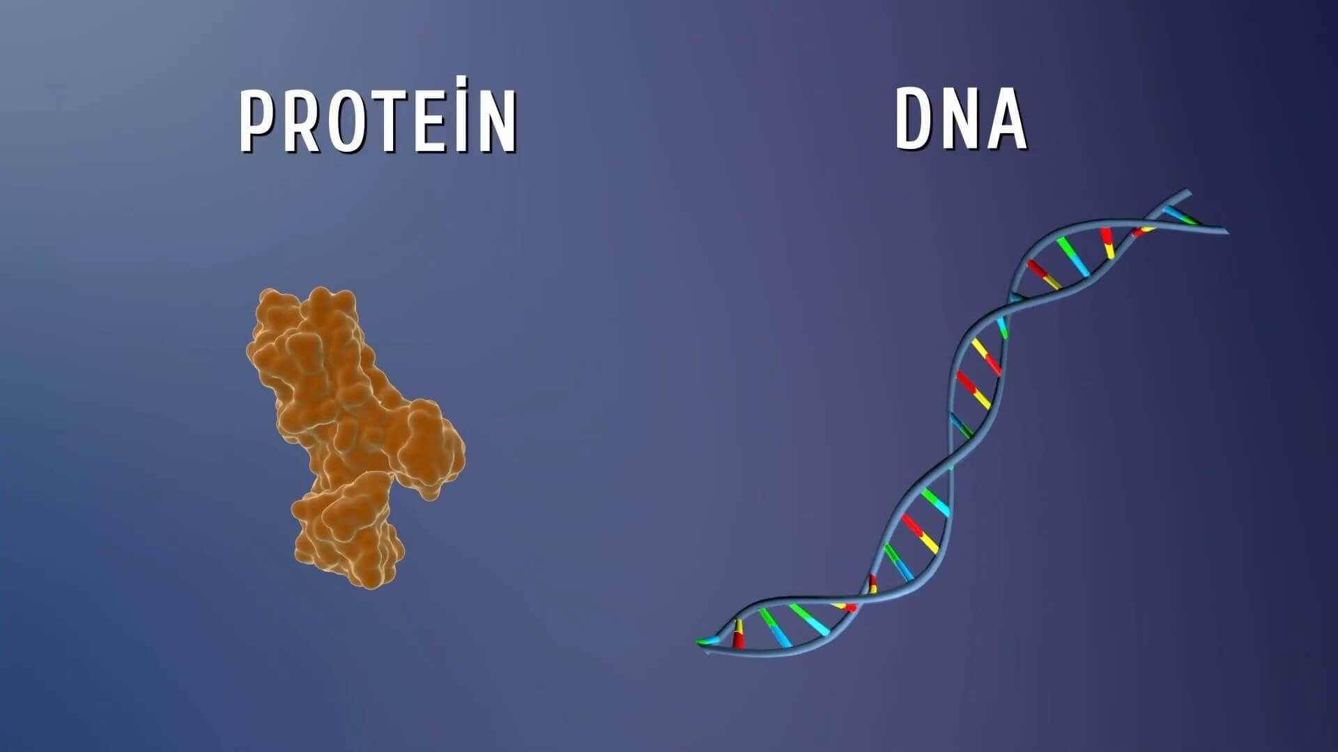 Proteindeki Yazılım İnsanoğlunun Maddesel Yapısı Belgesel Animasyon Film 3 1920x1080 - Proteindeki Yazılım, İnsanoğlunun Maddesel Yapısıyla İlgili Keşifleri