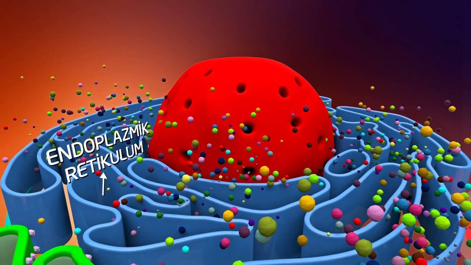 Proteindeki Yazılım İnsanoğlunun Maddesel Yapısı Belgesel Animasyon Film 8 1920x1080 - Proteindeki Yazılım, İnsanoğlunun Maddesel Yapısıyla İlgili Keşifleri