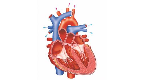 kalp - Anasayfa eski kullanılmayan